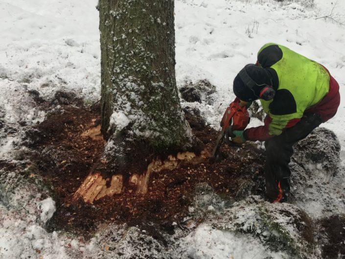 Reperage Bois - Mel -2018 - 2