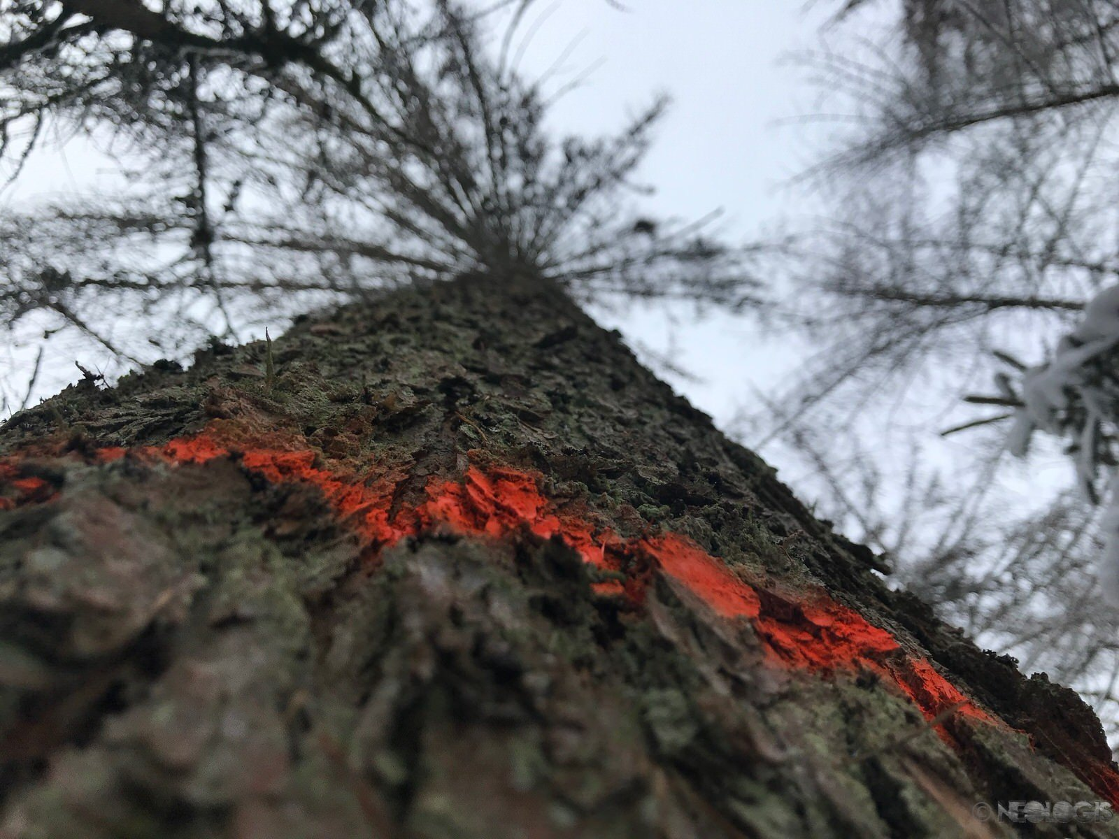 Reperage Bois - Mel -2018 - 6